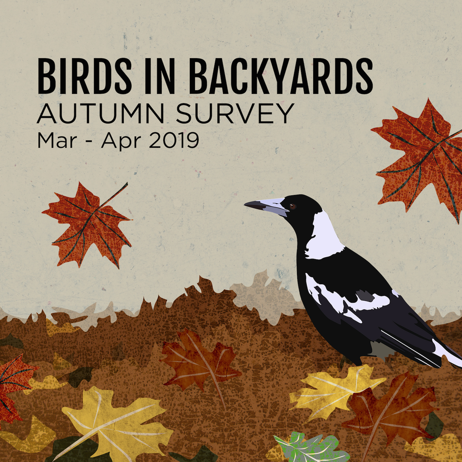 Birds in Backyards Autumn Survey 2018